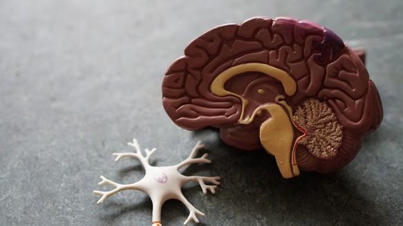 โปรแกรมตรวจสุขภาพสมอง